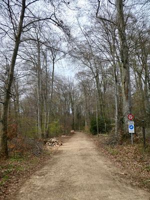 Waldweg im Grossholz