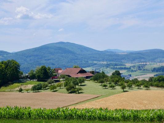Schlosshof Dornach