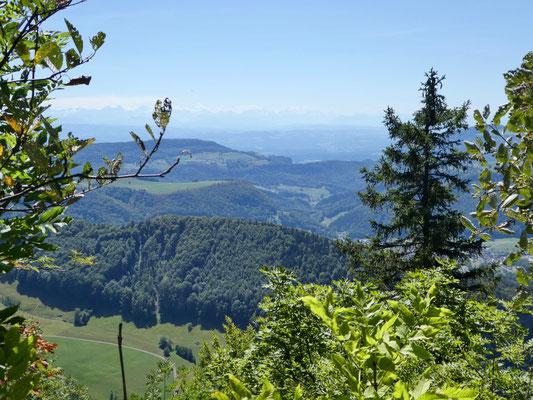Blick vom Chellenchöpfli zu den Alpen