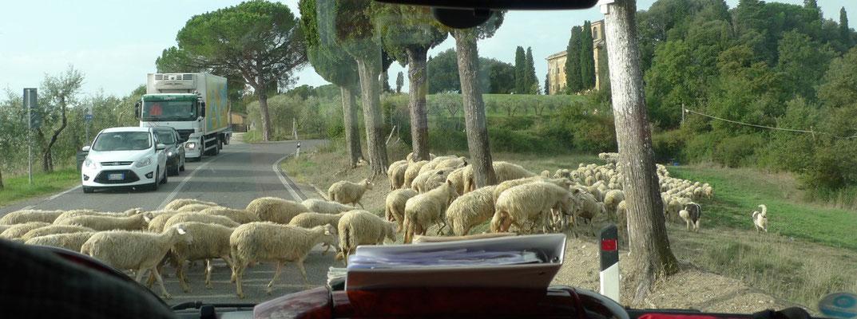 Auf dem Weg nach Murlo