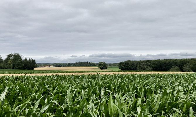 Weite Feldern - grosse Ruhe