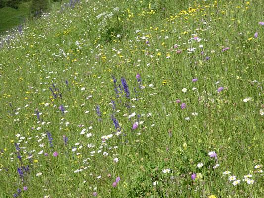 Prächtige Blumenwiesen