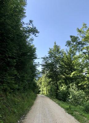Abstieg Fringeliweg