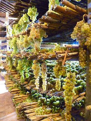 Trauben auf Bambus zum Trocknen für den Vin Santo