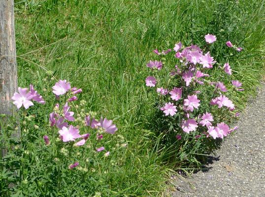 Schöne Blumen am Strassenrand