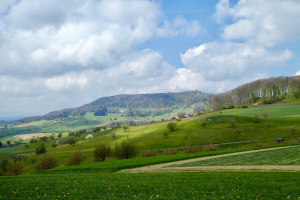 Blick Richtung Farnsburg