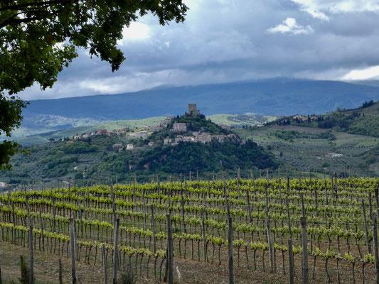 Blick über den Weinberg auf Rocca d'Orcia