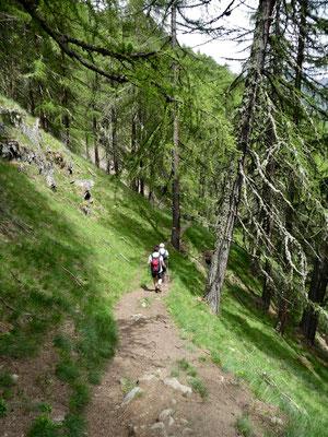 Durch den Arvenwald