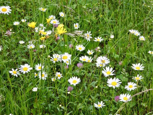 Prächtige Blumenwiese
