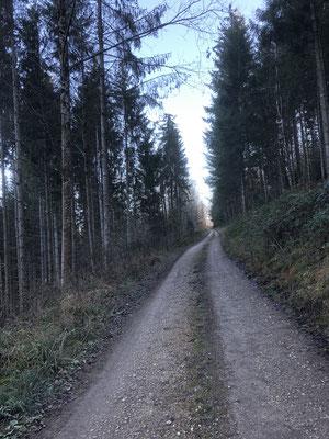 Waldweg hinauf zum Äbi