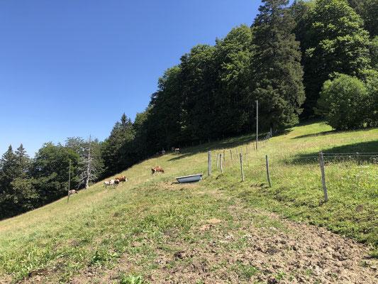 Weide auf dem Stierenberg