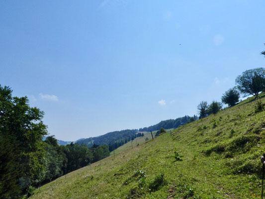 Weid Probsteberg