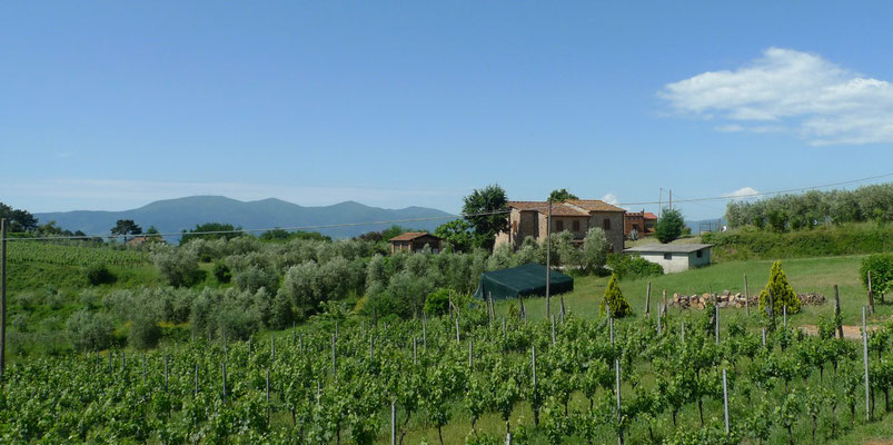 Landschaft vor Montecarlo