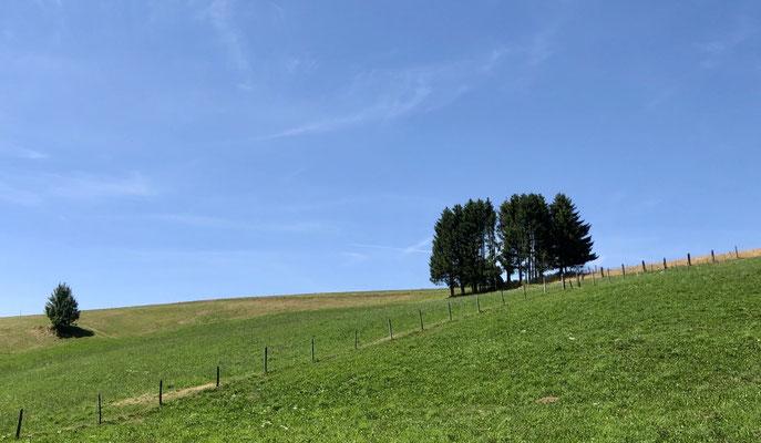 Baumgruppe wie in der Toskana