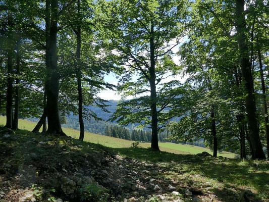 Die Weide von Grand Mont