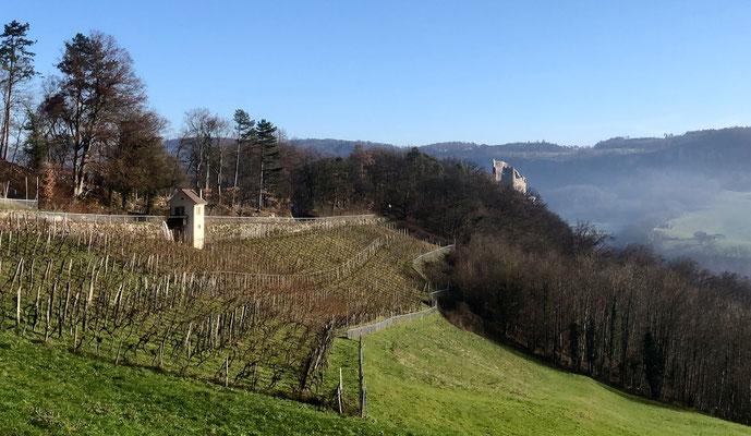 Rebberg mit Schloss