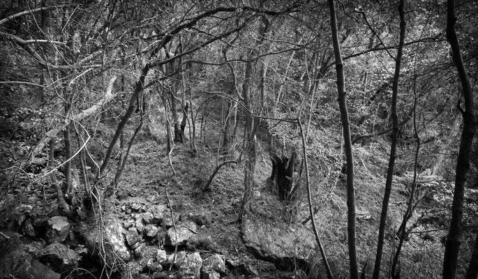 Wald Tafelberg