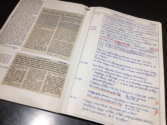 Mauersegler Aufzeichnungen zu den Bruten und Flug der Mauersegler in Rheinfelden