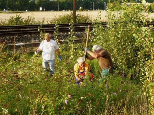 Neophyten Bekämpfung in Rheinfelden am Bahngleis zum Schutz der Biodiversität