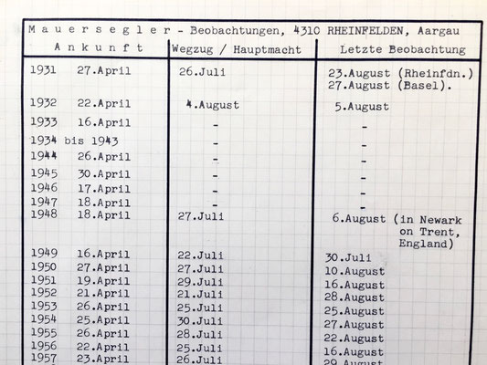 Mauersegler Mauerseglerstatistik Rheinfelden