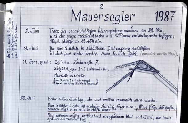 Mauersegler - Studie der Mauersegler historische Naturbeoabachtung