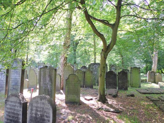 Jüdischer Friedhof Altona/Hamburg