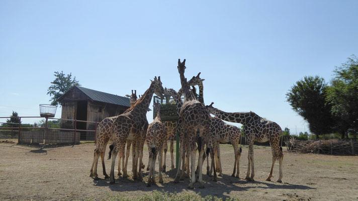 Ravenna Zoo