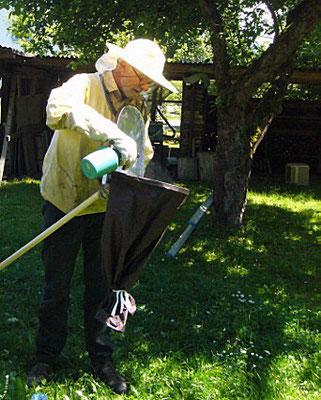 Mit einem feinen Wassersprühnebel werden die Bienen beruhigt