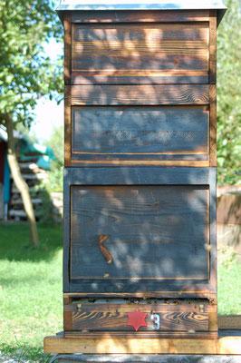 So wohnen unsere Bienen im Sommer