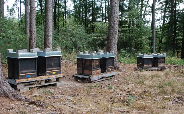 Unsere Bienen am neuen Standort im September