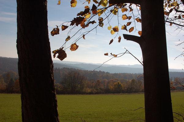 """Ein Blick aus dem """"Fenster"""" am Waldrand. Im Vordergrund eine Wiese zur Heugewinnung"""