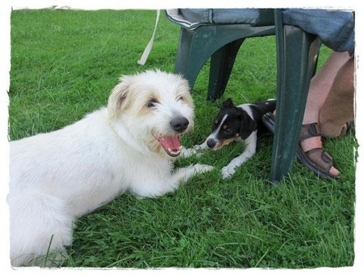 ... das wird eine tolle Freundschaft - Rudi und Coppa