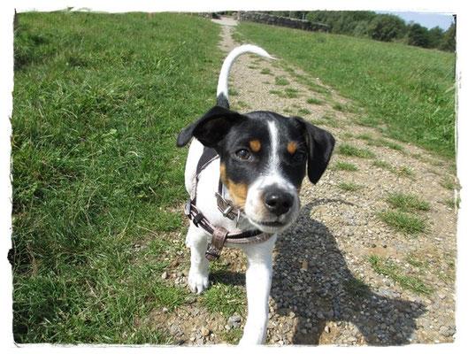 Das erste Mal auf der Hundeauslauffläche in Langenhagen und kaum Hunde hier :-(.
