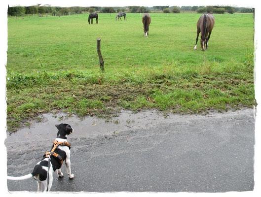 ... oh Pferde - gaaaanz vorsichtig