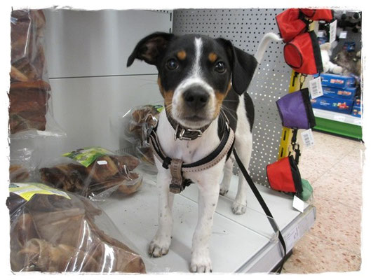 ... Hundeshopping bei Dehner