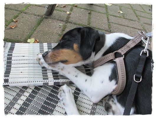 Hundeschule erledigt - Coppa erledigt!
