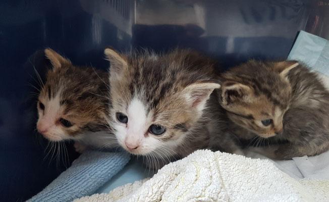 alle drei Kitten aus dem Auto mit mit Dieselduft