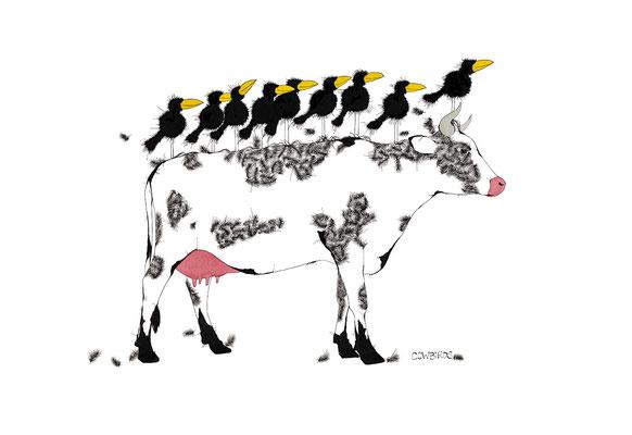 Cowbirds, Kunstdruck, limitierte Auflage, handsigniert, 48 x 33 cm