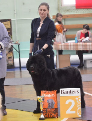 newfoundland kennel