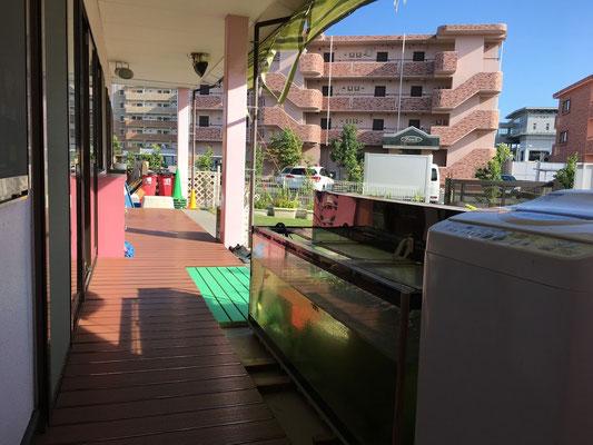 幼児園舎3歳児室前外廊下