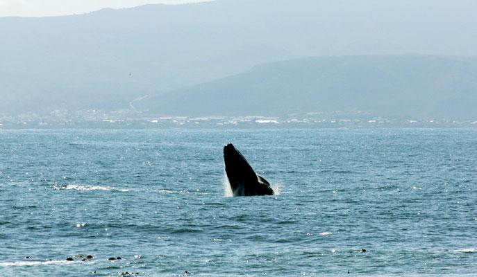 Wale!