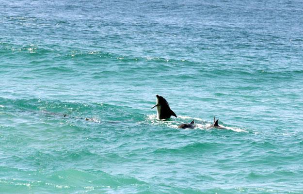 Delfine keine 20m vom Strand entfernt