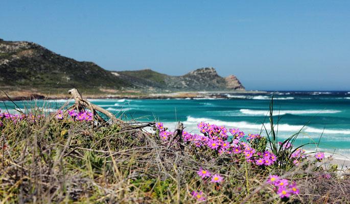 Cape of Good Hope Nature Reserve/Platboom