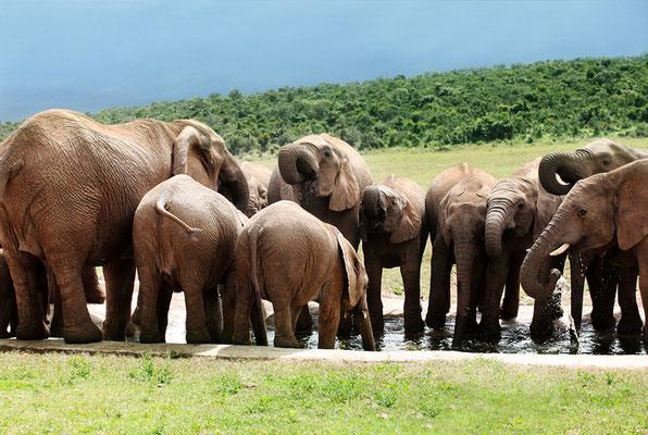 Addo Elefantenpark