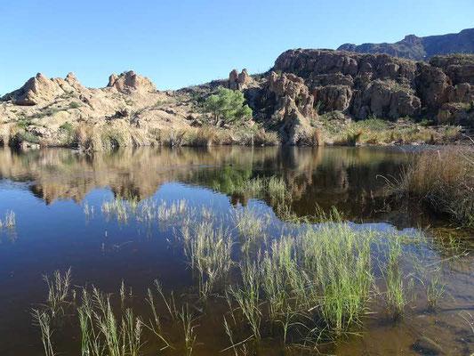Arboretum Supérior (AZ)