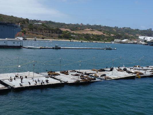 Vue sur les phoques de San Diego