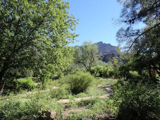 Boyce Thompson Arboretum (Superior)