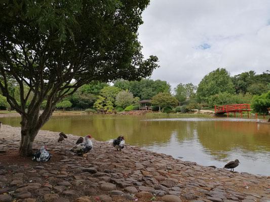 Toowoomba Japanese Garden