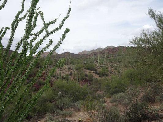 Arizona-Sonora Désert Museum
