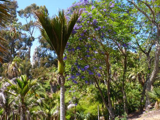 Balboa Park, San Diego (Californie)